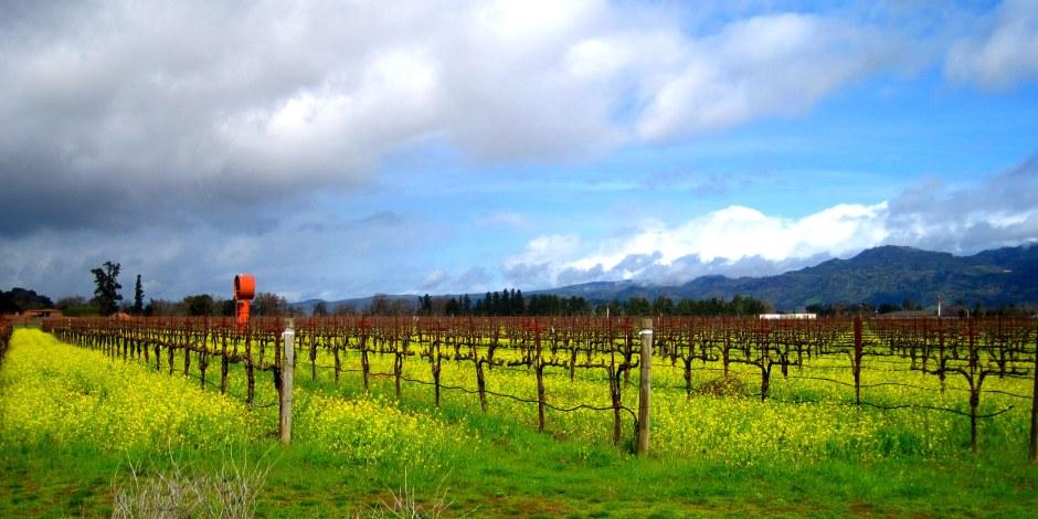 Tasteful Tannins Napa Valley